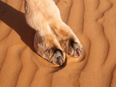 Fashion Fix: How To Get Rid Of Camel Toe